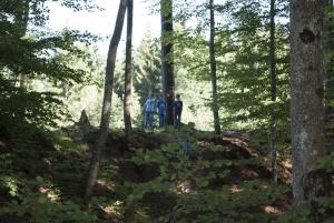 Waldstück neben dem Zeltlager in Immenried
